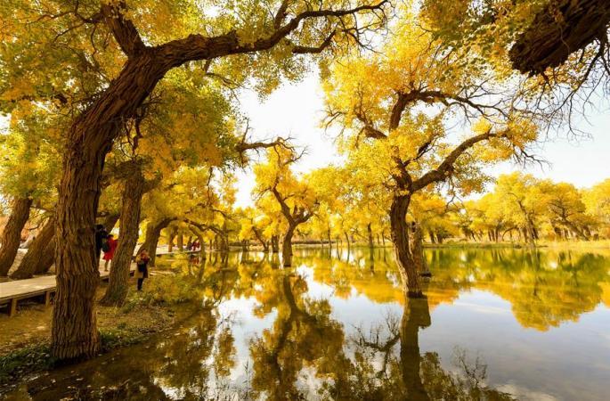 금추 사막의 후양림
