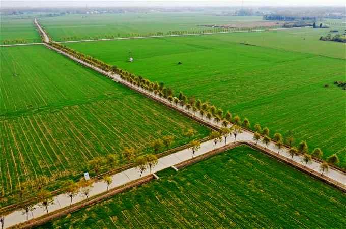 풋풋한 초록의 향연 펼친 보리밭