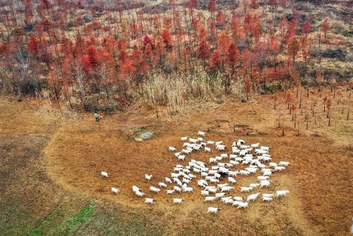 장쑤 쉬이: 톈취안에 그림자 드리운 세쿼이아 숲