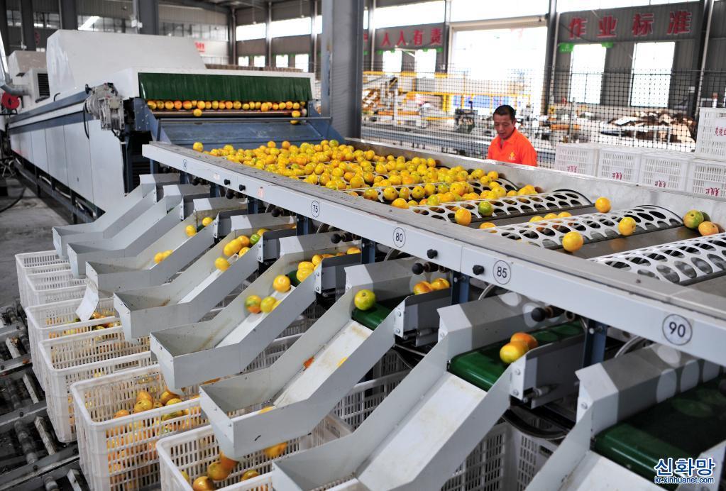 농가 소득 증대 이끄는 감귤산업